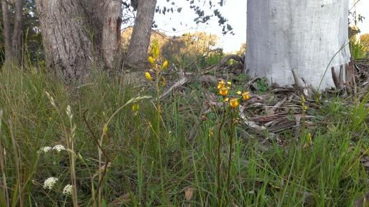 Baarmutha_grassland